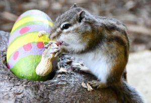 Easter at Battersea Park Zoo